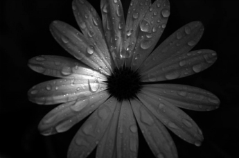 flor-11.jpg