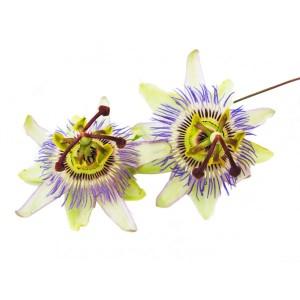 pasiflora-encarnata-planta-cortada